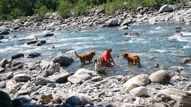 Frau mit Hunden im Fluss.