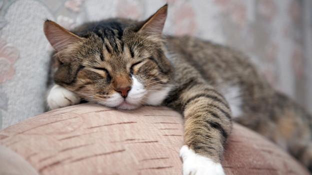 allein zuhause wenn die katze ihr frauchen vermisst treffpunkt srf. Black Bedroom Furniture Sets. Home Design Ideas