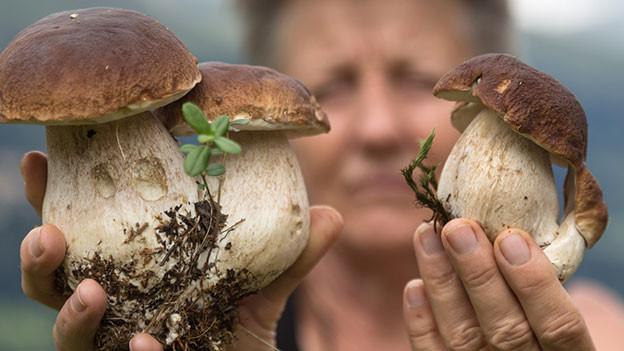 Frau hält sich mit beiden Händen Pilze vors Gesicht, um sie zu begutachten