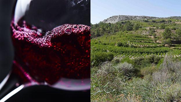 Weinglas und Reblandschaft in Zypern.