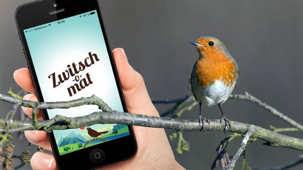 Ein Rotkehlchen sitzt auf einem Ast, daneben ist ein Handy auf dem Bild mit der «Zwitsch-o-mat»-App.