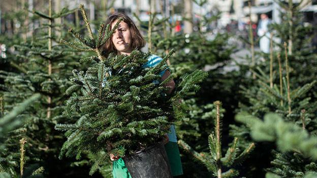 Frau trägt auf dem Weihnachtsbaummarkt einen Baum weg.