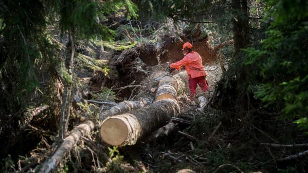 Ein Forstarbeiter zersägt einen liegenden Baumstamm