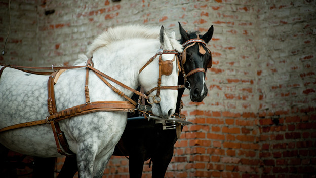 Zwei Pferde vor Kutsche.