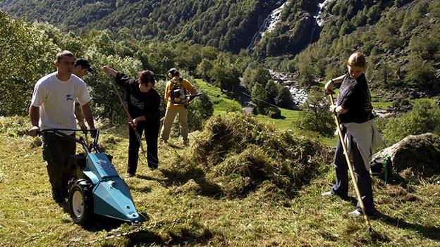 Junge Leute arbeiten im Berggebiet und mähen Gras.