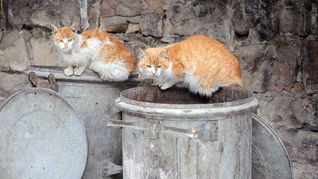 Zwei Katzen liegen auf einer Mülltonne.
