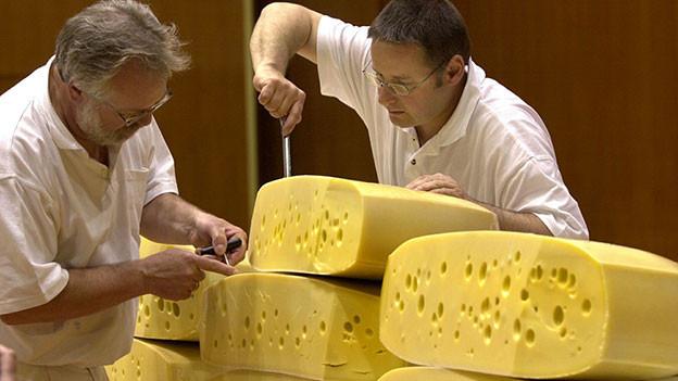 Zwei Männer nehmen Proben aus Emmentalerlaiben.