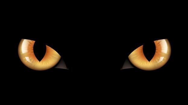 zwei gelbe Katzenaugen vor schwarzem Hintergrund