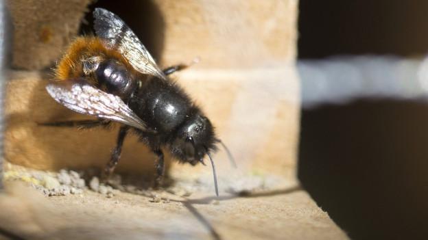 Honig- und Wildbienen sind für Menschen wichtig