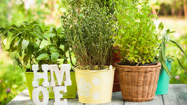 heilpflanzen auf dem balkon gesund und h bsch anzuschauen ratgeber srf. Black Bedroom Furniture Sets. Home Design Ideas