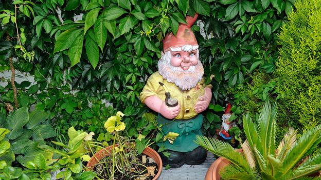 Ein Gartenzwerg steht inmitten von grünen Pflanzen.
