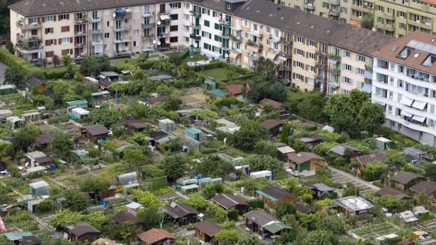 Luftbild über ein städtisches Quartier, wo sich zwischen Wohnhblöcken eine Familiengarten-Anlage erstreckt.