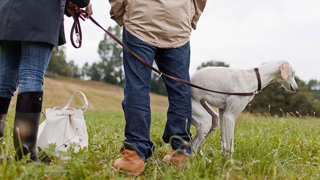 Zitternder Hund schmiegt sich an die Beine von Menschen.
