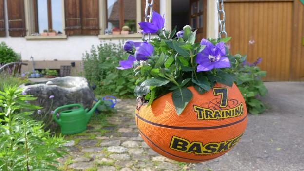 Blumen sind in einen alten Basketball gepflanzt, der aufgehängt wurde