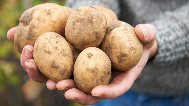 Eine Person hält rohe Kartoffeln in den Händen.