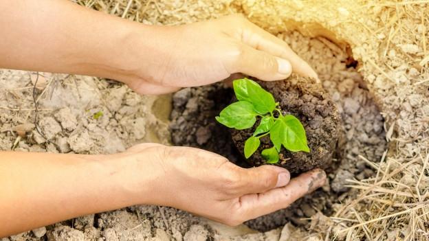 Zwei Hände halten ein Baum-Pflänzchen, um es in die Erde zu setzen