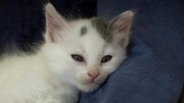 Junge Katze.