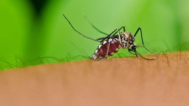 Eine Mücke sitzt auf einem Arm.
