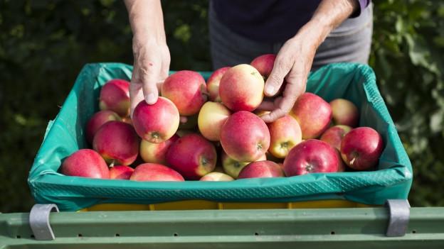 Kister voller Äpfel