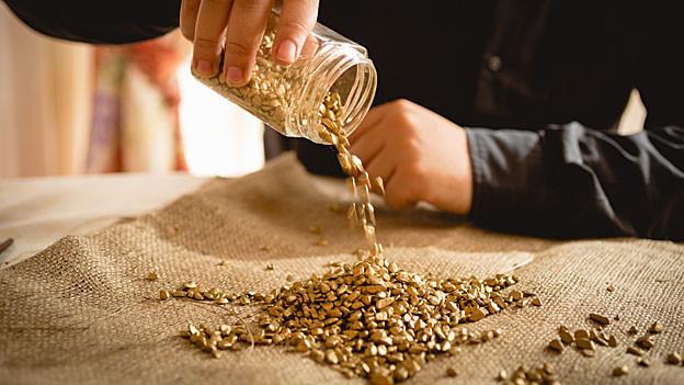 Goldnuggets werden auf den Tisch ausgeleert