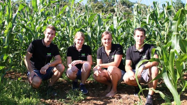 Vier Studierende in einem Maisfeld