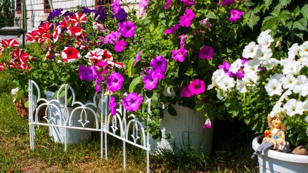 Diverse Beete mit Blumen in einem Garten.