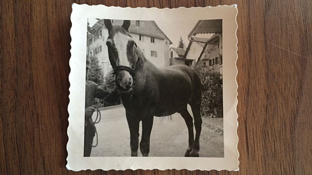 «Fränzu», das letzte Pferd von Ernst Burrens Vater. Spielt eine grosse Rolle in seinem neuen Roman