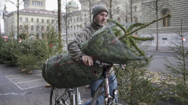 Mann transportiert einen Weihnachtsbaum mit dem Fahrrad.