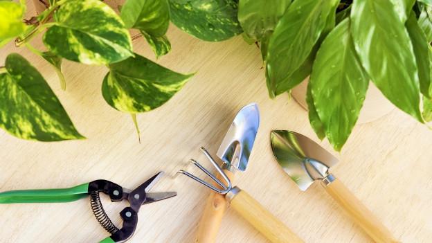 Zimmerpflanzen und Gartenwerkzeug.