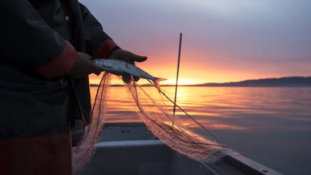 Fischer fischt bei Sonnenuntergang im Boot.