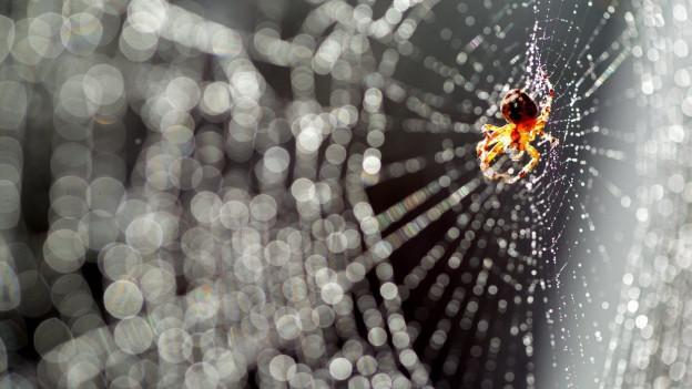 Eine Spinne ist auf Beutejagd.