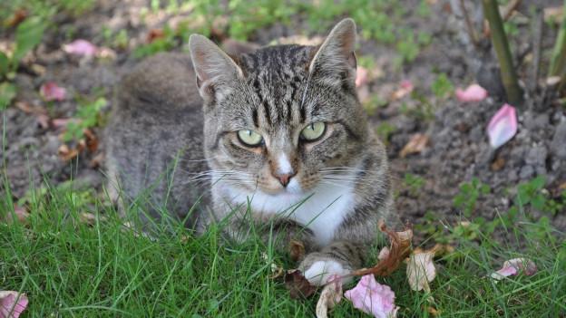 Katze in der Wiese.