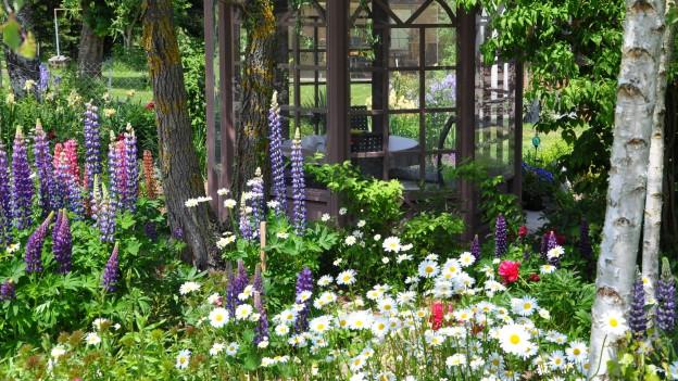 Garten mit Blumen.