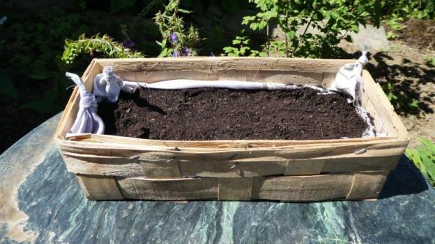 Zipfelsaat und Pflanzenteppich – genial einfach!