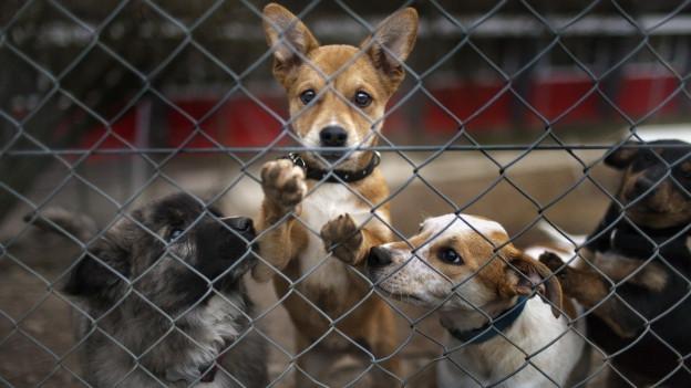 Hunde hinter Gitter.