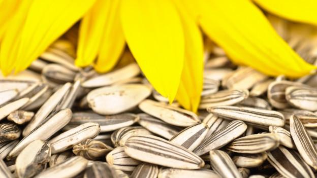 Sonnenblumen und Sonnenblumenkerne.