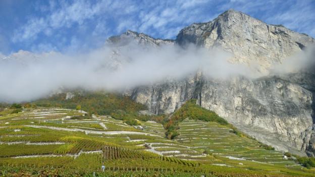 Das Bild zeigt eine Aussicht im Walis mit Bergen und Rebbergen.