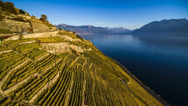UNESCO-Weltkulturerbe: Die Lauvaux-Weinterrasse am Genfersee.