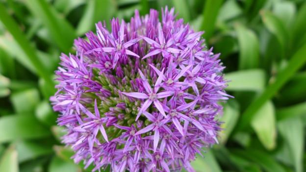 Blüte mit vielen kleinen, sternförmigen Blütenblättern.