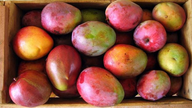 Eine Kiste mit Mangos.