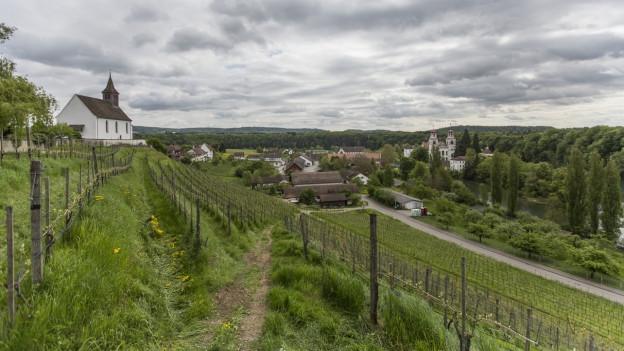 Blick über Rebberge auf das Kloster Rheinau.