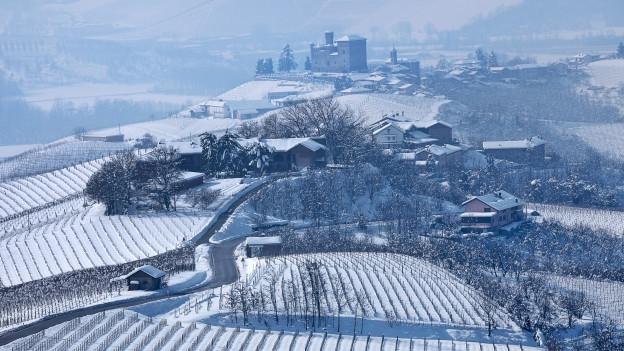 Winterliche Reblandschaft in den Langhe (Piemont).