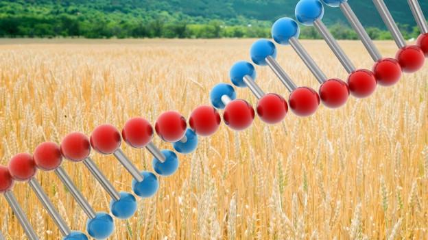 Gen-Technisch verändertes Essen macht noch immer angst. Die Sendung Forum fragt, wieso?