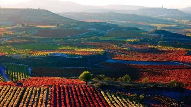 Reblandschaft im Rioja-Gebiet.