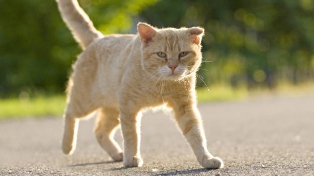 Katze läuft