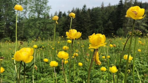 4000 wild vorkommenden Pflanzen gibt es in der Schweiz.