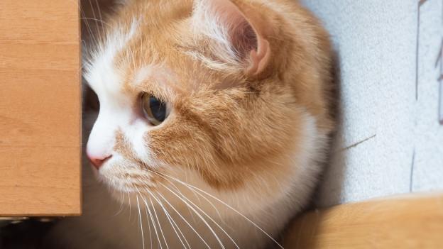 Entlaufene Katzen finden sich oft in Kellern oder Garagen von Nachbarn.