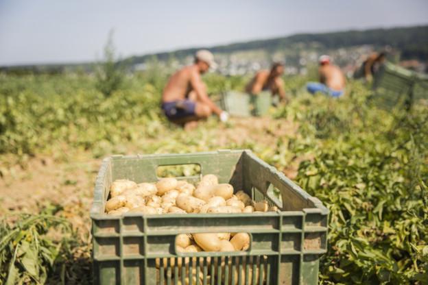 Arbeitsbedingungen unter die Lupe nehmen. Das verlangt die «Fair Food»-Initiative.