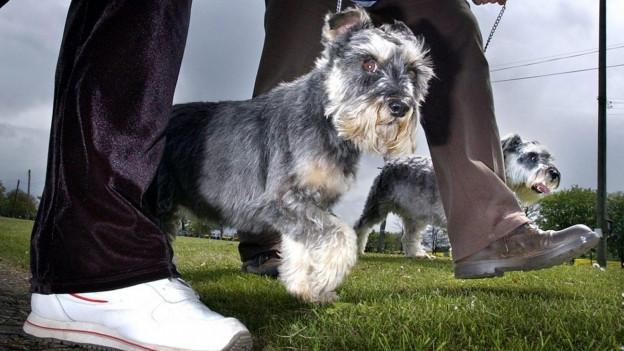 Kleiner Hund zwischen den Beinen seiner Besitzer