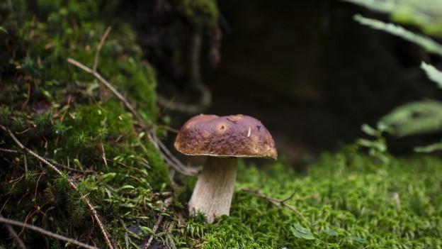 Augen auf beim Pilze sammeln!